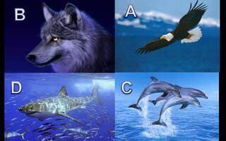 Aguia Golfinho Lobo Ou Tubarao Faca O Teste E Descubra Seu