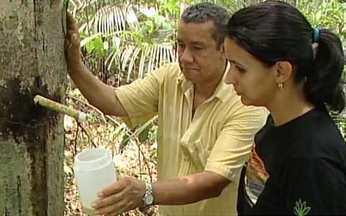 Copaíba da Amazônia é aposta da medicina fitoterápica - As poderosas copaíbas produzem um óleo que pode agir como antibiótico e anticancerígeno. As árvores estão distantes umas das outras na floresta.