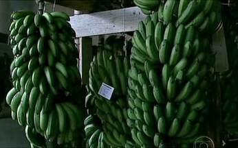 Produtores fazem festa para comemorar safra da banana - Produtores de Santa Bárbara do Tugúrio, na Zona da Mata mineira, fazem festa para comemorar a safra da banana. Tem até concurso: o melhor prato culinário e o cacho mais pesado.