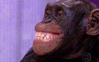 Caras & Bocas - Capítulo de sexta-feira, 4/12, na íntegra - Dafne apresenta Xico aos convidados. Denis faz um discurso em homenagem a Xico quando Judith invade a exposição. Bianca sugere que o macaco escolha com quem quer ficar.