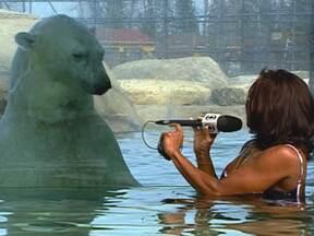 Glória Maria mergulha com ursos em área de degelo de iceberg - A repórter vai em busca dos grandes ursos polares no Canadá. Ela visita um centro de pesquisas desses animais em Cochrane, na província de Ontário.
