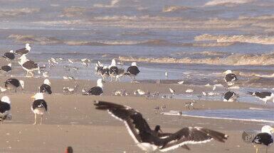 Terra da Gente - litoral gaúcho - bloco 1 - A equipe do programa Terra da Gente viajou até o litoral gaúcho para explorar as belezas da fauna local.