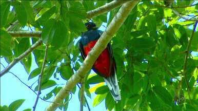Terra da Gente – Fazenda Bacury – Bloco 2 - Na aventura atrás das aves, um show de espécies, cores e sons com o pica-pau-rei, o pimentão, o curioso narcejão e o raro patinho-gigante.