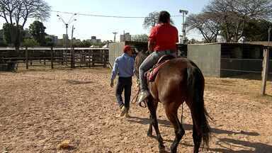 Cavalo mangalarga vai ser tema de escola de samba no Rio de Janeiro - Animal também encantou a criançada neste sábado (21).
