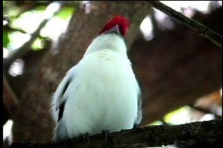 Luiz Gonzaga, o 'rei do baião', cantou a Serra do Araripe em suas músicas - Serra é área de proteção ambiental e tem espécies que só vivem no local.