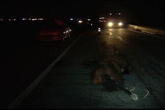 Cavalo na pista provoca dois acidentes na rodovia do Contorno, no ES - Mulher foi atendida pelo Serviço de Atendimento Móvel de Urgência
