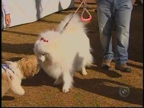 Estimacão leva milhares de pessoas ao Parque Vitória Régia em Bauru, SP - O 'Estimacão' promoveu o concurso dos cachorros na manhã deste domingo (19), no Parque Vitória Régia, em Bauru (SP). De acordo com a organização, cerca de 10 mil pessoas acompanharam o evento promovido pela TV Tem.