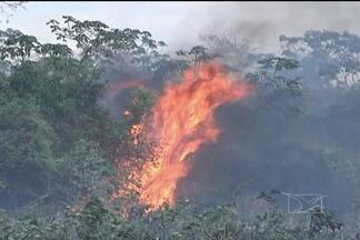 Focos de queimadas se alastram pelo cerrado na região central do Estado - Em Grajaú, o fogo ameaça plantações e animais. O município, que tem o maior índice de pontos de incêndios no país, trava uma batalha contra o fogo, que avança por causa dos vento