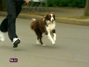Canicross: conheça o esporte que faz cães e donos se exercitarem juntos - Agora você pode manter a forma com a ajuda do seu bichinho de estimação