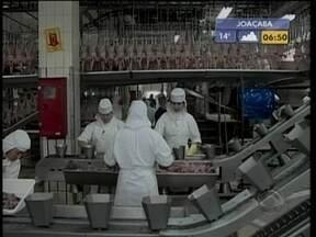 Operações de frigorífico do Oeste passam ao controle da cooperativa Aurora - Com a decisão, capacidade de abate da Aurora passa de 600 mil para 700 mil frangos por dia.