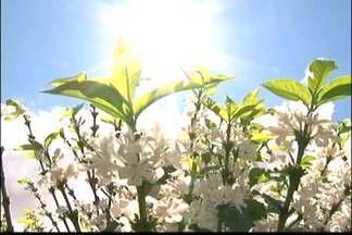 Florada do café chega mais cedo este ano no ES - Agricultores do estado foram surpreendidos pela florada antecipada