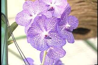 João Pessoa tem exposição de orquídeas - Evento acontece em shopping e será realizado até este domingo (30).