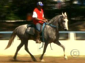 Franca sedia uma das mais importantes exposições de cavalos mangalarga do país - O município de Franca, em São Paulo, sedia uma das mais importantes exposições de cavalos da raça mangalarga do país. Cerca de 500 animais disputam os prêmios.