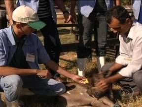 Curso para produtores de leite dá resultados em Goiás - Muitos procuram o curso interessados em aprender técnicas que podem melhorar a produção e ajudar a reduzir os cursos da propriedade. O programa é gratuito e aberto a todos os produtores.