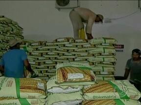 Produtores de Mato Grosso se preparam para o plantio do milho safrinha - A cultura, no norte do estado, só deve ser semeada em janeiro de 2013, mas os produtores que já se adiantaram e compraram os insumos necessários para o plantio, sentem o aumento no custo de produção.