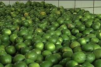 A maior parte das frutas e verduras vendidas no Maranhão vem de outros estados - A Ceasa é o local onde comerciantes e consumidores costumam fazer as compras da semana. Mas com a estiagem, registrada este ano no nordeste, os preços dos produtos hortifrutigranjeiros aumentaram consideravelmente.