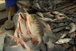 Longo período de estiagem na região do Médio Mearim prejudica a produção de pescado - Longo período de estiagem na região do Médio Mearim prejudica a produção de pescado. O peixe que antes era comum na região agora praticamente desapareceu. Com a escassez do produto o preço só aumenta.