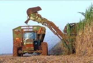 Cana deve fechar safra com crescimento de volume em MS - O setor sucroalcooleiro começa a comemorar a retomada do crescimento em Mato Grosso do Sul. A previsão é de que a safra deste ano da cana-de-açúcar feche com quase 5 milhões de toneladas a mais em relação ao ano passado.