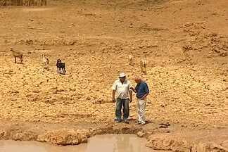 Agricultores sofrem com a perda das lavouras e animais por conta da seca - Criadores da Paraíba, Sergipe e Piauí tiveram este ano grandes perdas no rebanho por causa da seca. No Cariri da Paraíba, a seca atinge pequenos e grandes produtores.