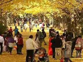 Mudança de estação no Japão transforma as paisagens em belíssimas pinturas - A mudança nas cores das folhas das árvores pinta as paisagens, dando sinais de que os dias frios e com pouca luz do inverno estão chegando. Os japoneses passam horas pelas ruas procurando as melhores imagens para fotografar a natureza.