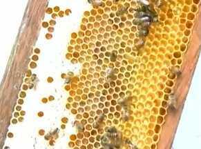 Conheça projeto piloto para aumentar produção de mel em Guaratinga - Vinte apicultores participam da experiência.