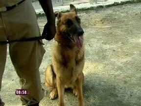 Boa ação de fim de ano: conheça os cães para adoção da Guarda Municipal - Os bichinhos da instituição no RJ podem ser adotados quando se aposentam