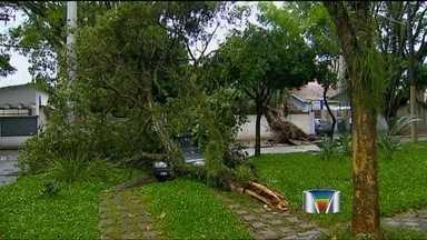 Forte chuva causa estragos em bairros de São José dos Campos (SP) - A forte chuva que atingiu São José dos Campos (SP) derrubou árvores e causou estragos na cidade.