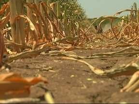Soja e milho alcançaram preços recordes em 2012 - Ano de 2012 vai entrar para a história como o dos preços recordes. Clima afetou lavouras no Brasil, na Argentina e nos Estados Unidos.