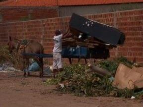 Moradores do bairro Macaúba reclamam do lixo jogado nas ruas - Reclamam também da queima do lixo, que pode causar incêndios