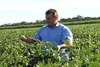 Metade de produção de soja de MS foi vendida a poucas semanas para início de colheita - Em Mato Grosso do Sul, deve ser colhidas mais de 6 milhões de toneladas de soja. A poucas semanas para o início da colheita, quase metade da produção já foi vendida.