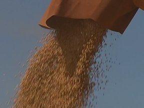 Assista ao segundo bloco do Caminhos do Campo do dia 20 de janeiro - Começa a colheita de soja no estado