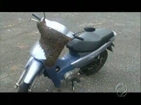 Telespectador envia imagens de enxame que toma conta de uma moto em Apucarana - Em Apucarana um apicultor retirou abelhas que tomaram conta de uma moto num condomínio residencial. Em Londrina a Sema retirou a colméia próximo a local, onde um ataque de abelhas matou um homem na semana passada.