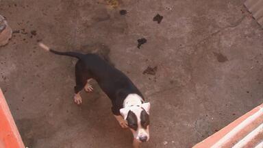 Polícia Militar resgata cão que estava sem receber comida e água - Animal pertencia à mesma empresa denunciada por irregularidade parecida na semana passada.