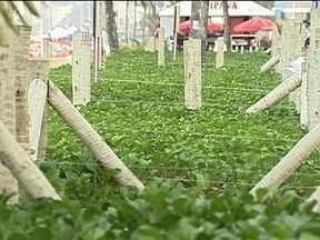 Prefeitura realiza reunião para definir proteção de canteiros durante carnaval - A Riotur ficou responsável por cercar a vegetação da orla de Ipanema e de ruas internas do Leblon e da Praça General Osório. Monumentos também serão cercados.