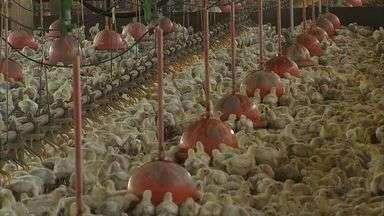 Preço do frango sobre até 40% em seis meses no Ceará - Preço do frango sobre até 40% em seis meses no Ceará e deixa de ser a opção considerada barata no cardápio.