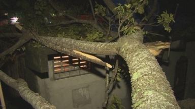 Árvore desaba e causa transtornos em Manaus - No fim de semana, uma árvore caiu causando transtornos aos moradores da Rua Angélica, no bairro Jorge Teixeira