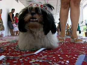 Desfile carnavalesco de cães anima a 205 Norte - Cerca de 30 cães participaram do Carnaval Para Cachorros, que está se tornando uma tradição na 205 Norte. O ponto alto foi o desfile, onde cada um exibia a sua fantasia ao lado de seu dono. Mais o principal destaque deste ano foi uma gata.