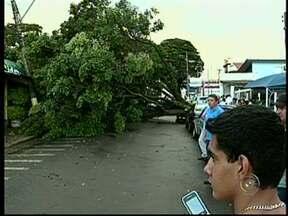 Temporal provoca destelhamento e queda de árvores em Avaré, SP - A chuva durou apenas 15 minutos, mas foi suficiente para derrubar uma árvore sobre uma moto e uma carretinha engatada no carro. Também houve destelhamento. Ninguém ficou ferido.