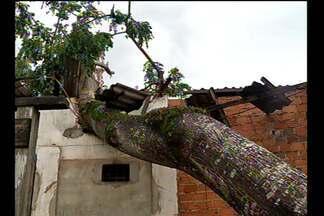 Árvore cai no bairro do Tapanã, em Belém, e causa prejuízos para comerciantes - Segundo os Bombeiros, a ventania desta sexta-feira (22) provocou a queda de outras sete árvores no bairro.