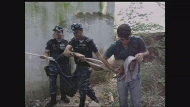 Guarda Municipal de Botucatu, SP, captura fêmea de veado - Animal apareceu dentro de universidade.