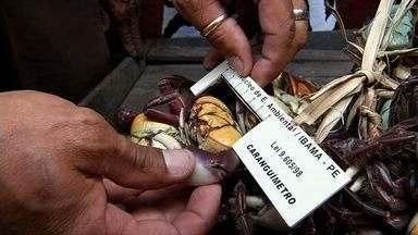 Comunidades fornecedoras de caranguejos procuram alternativas no período do defeso - Defeso acontece em períodos semanais entre janeiro e março.