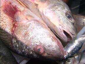 Preço de peixes e pescados sofre queda antes da 'semana santa' - Preço de peixes e pescados sofre queda antes da 'semana santa'