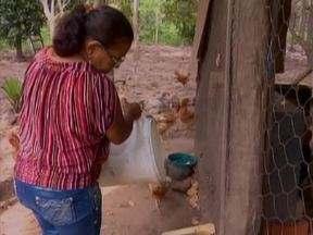 Moradores do Povoado Soturno reclamam da falta do abastecimento de água - Moradores do Povoado Soturno reclamam da falta do abastecimento de água