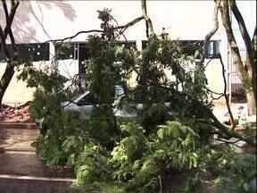 Ventania provoca alguns estragos em Paranavaí - Um vento forte derrubou galhos de algumas árvores do Jd. São Jorge, na tarde desta sexta-feira (08). Alguns carros foram atingidos.