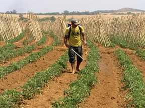 Curso em Goiás ensina a agricultores proteção contra intoxicações - Em 2010, 171 pessoas morreram intoxicadas no campo. Foram 4.789 casos de intoxicação no país no período.