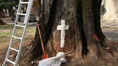 """Moradores se reúnem para protestar contra poda de árvores em avenida de Belo Horizonte - O movimento """"Fica Fícus"""" sugiu após poda de árvores centenárias."""