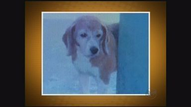 Prefeitura de Araraquara, SP, é condenada a pagar indenização para dona de cachorro - Animal foi sacrificado no Centro de Zoonoses há um ano.