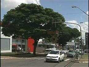 Cortados galhos que atrapalhavam visão dos motoristas na Avenida Tiradentes - Foram 40 dias de espera depois que a reclamação foi mostrada no Paraná TV. O trecho é bem movimentado.