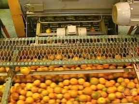 Indústrias de suco de laranja pagarão mais de R$ 400 milhões em indenizações trabalhistas - Uma decisão judicial determinou que as indústrias de suco de laranja paguem mais de R$ 400 milhões em indenizações trabalhistas. O juiz do caso entendeu que elas são responsáveis pela contratação dos trabalhadores que fazem a colheita da safra.