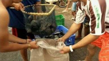 Sobral distribui mais de mil quilos de peixe - Peixes foram doados por associação de pescadores.